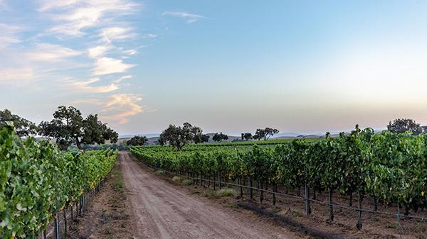 Mesa C Vineyard Block