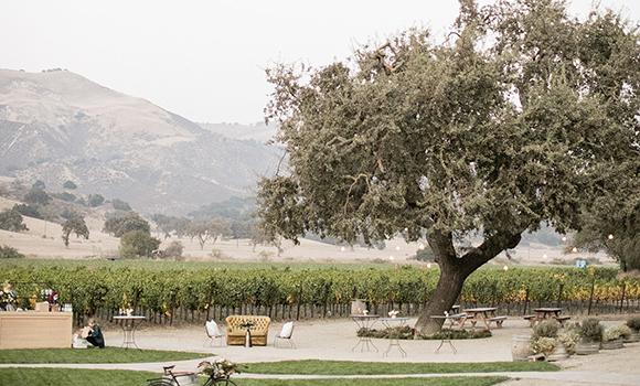 Vineyard lawn and oak tree